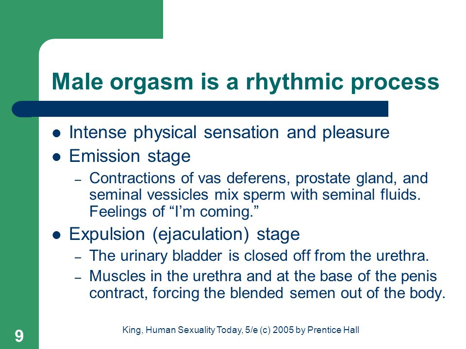 Male orgasm is a rhythmic process