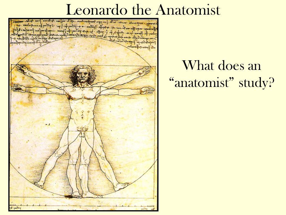 Leonardo the Anatomist