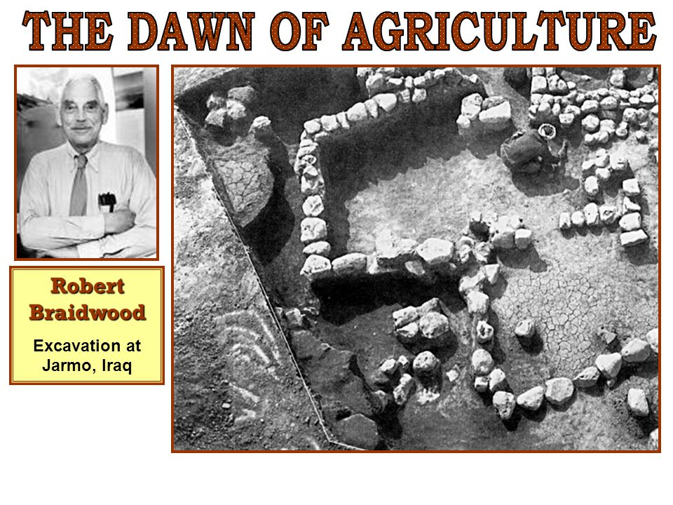THE DAWN OF AGRICULTURE Excavation at Jarmo, Iraq