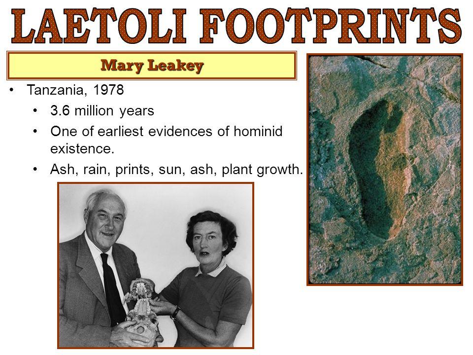 LAETOLI FOOTPRINTS Mary Leakey Tanzania, 1978 3.6 million years