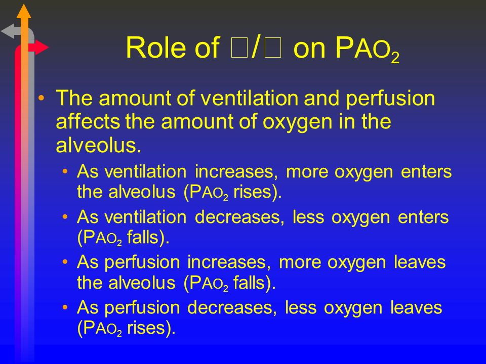 Role of / on PAO2 The amount of ventilation and perfusion affects the amount of oxygen in the alveolus.