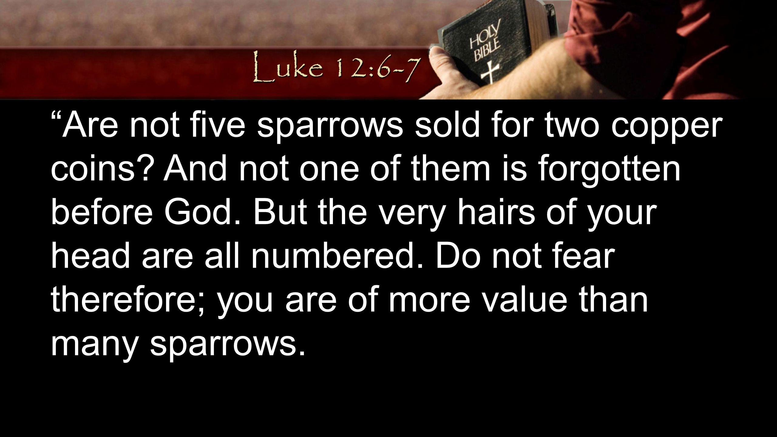 Luke 12:6-7