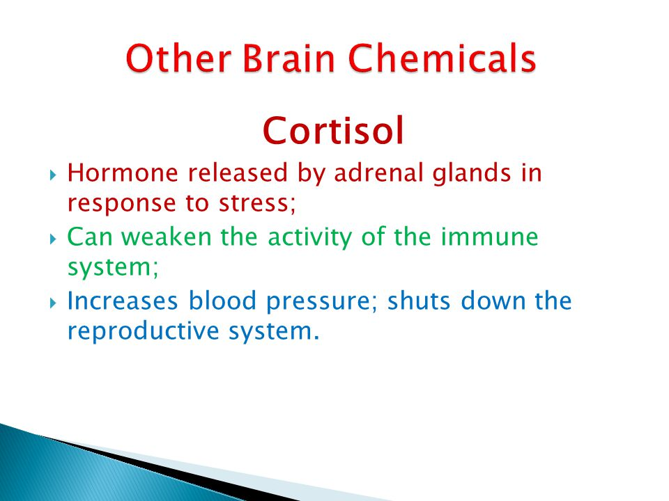 Other Brain Chemicals Cortisol