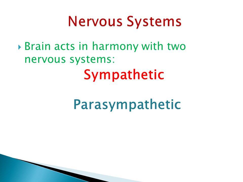 Nervous Systems Parasympathetic