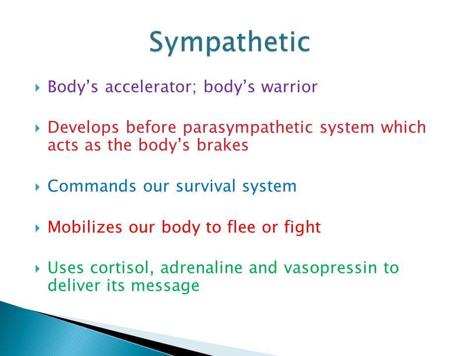 Sympathetic Body's accelerator; body's warrior