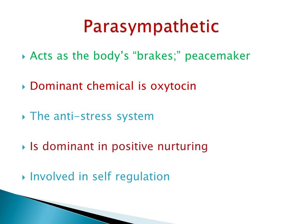 Parasympathetic Acts as the body's brakes; peacemaker