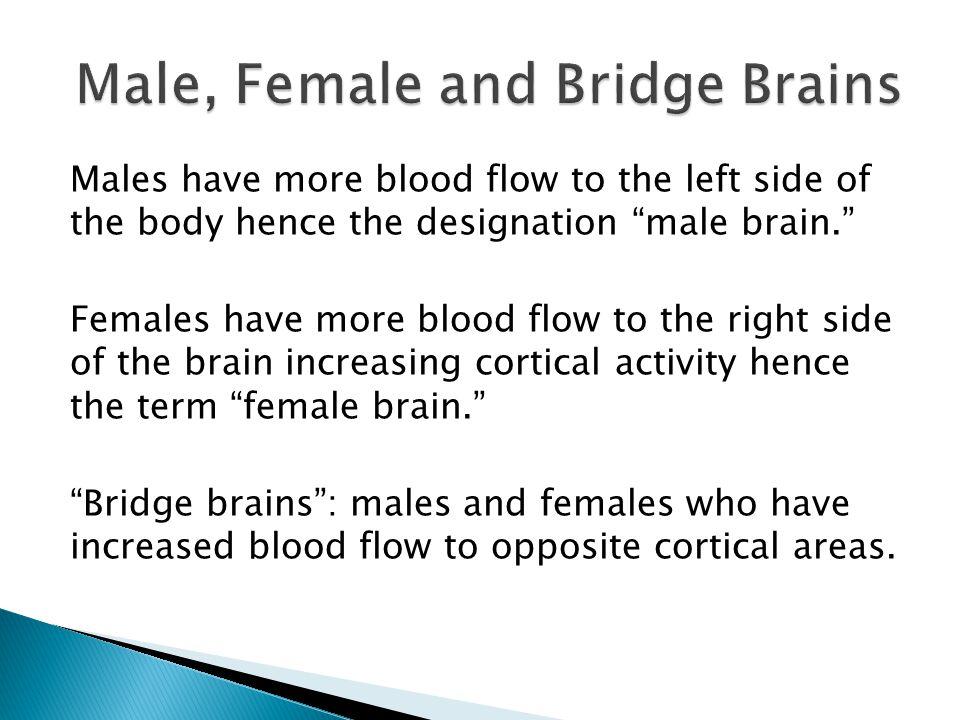 Male, Female and Bridge Brains