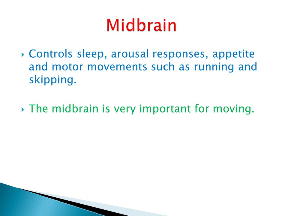 Midbrain Controls sleep, arousal responses, appetite and motor movements such as running and skipping.