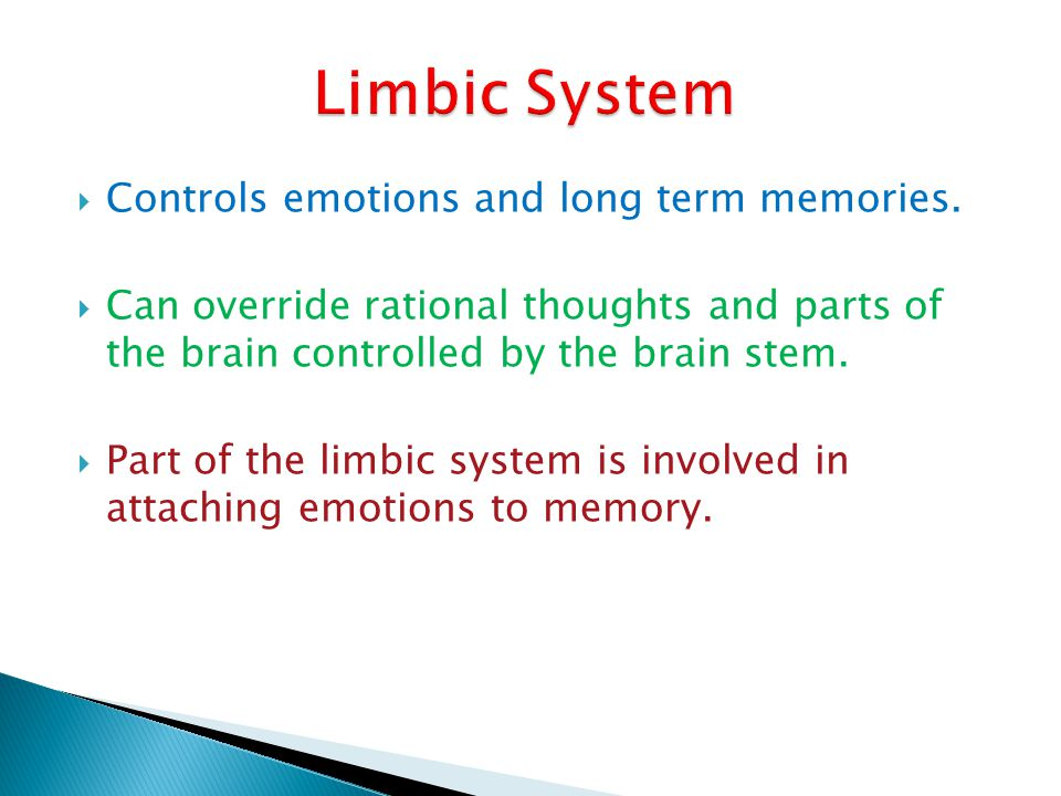 Limbic System Controls emotions and long term memories.