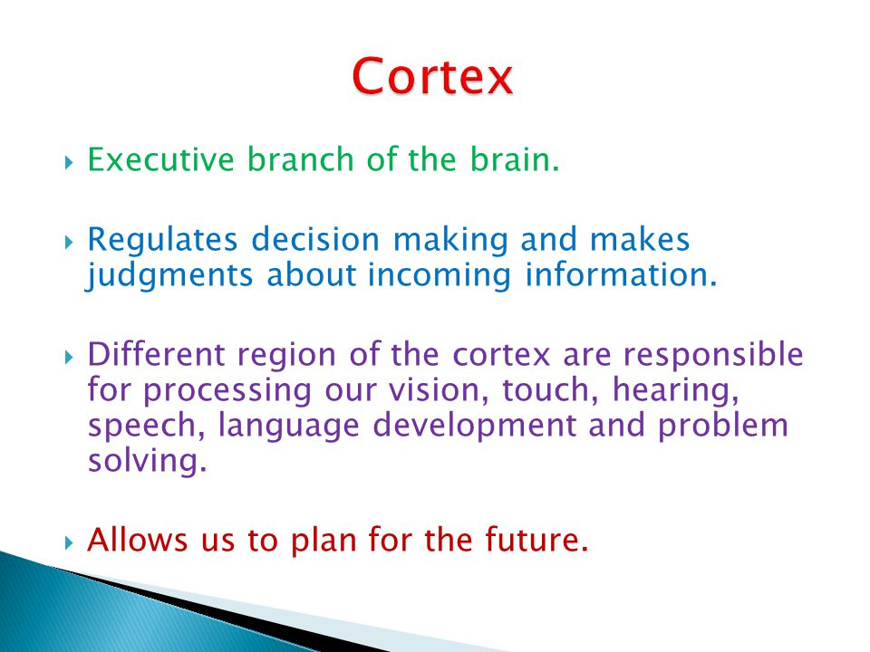 Cortex Executive branch of the brain.
