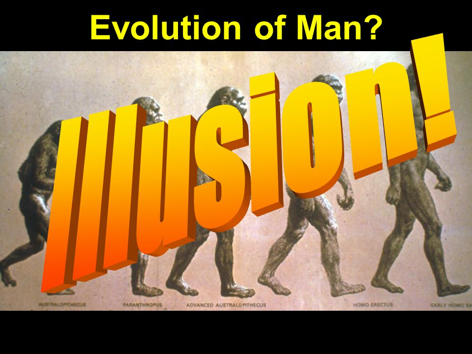 Evolution of man—progression: Illusion!