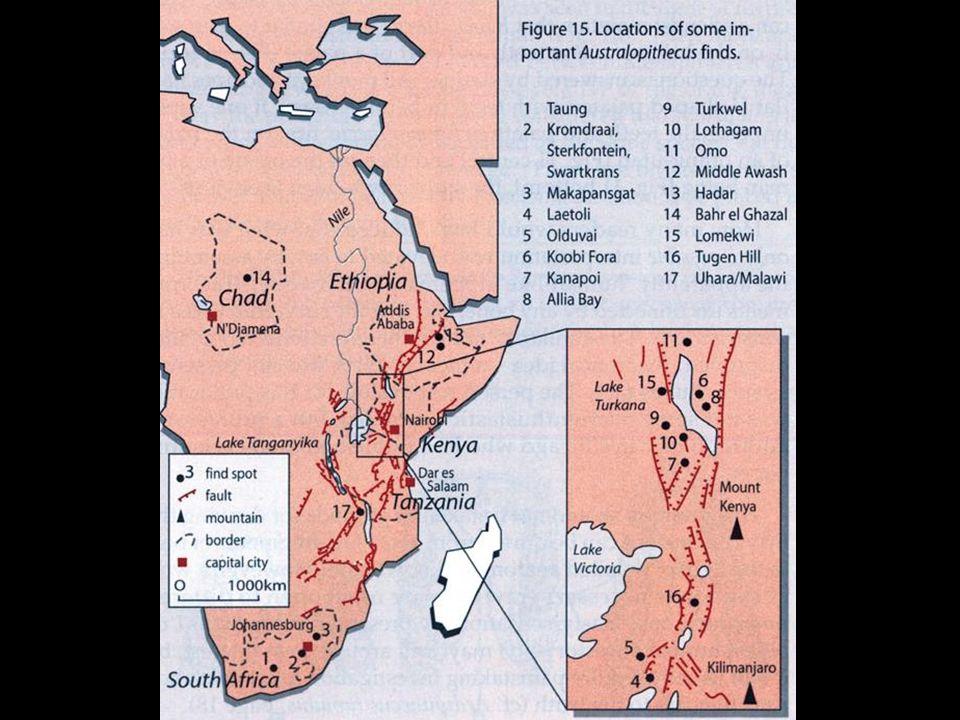 Australopithecines—Kenya map