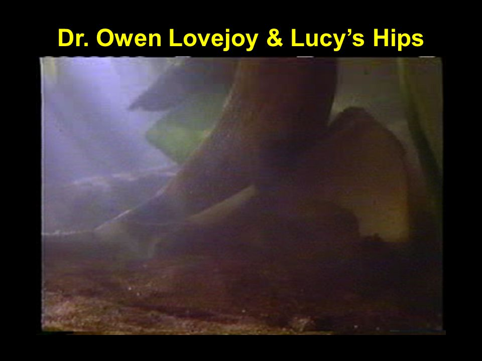 Lovejoy grinding Lucy's hips