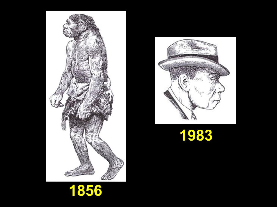 Neanderthals—then (1856) and now (1983)