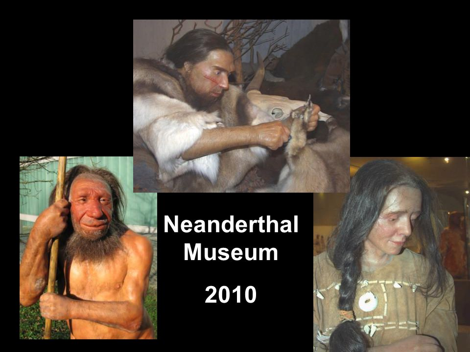 Neanderthal Museum 2010. Top: http://commons.wikimedia.org/wiki/File:Neandertaler-im-Museum.jpg (public domain picture from Laura Strobl at AiG).