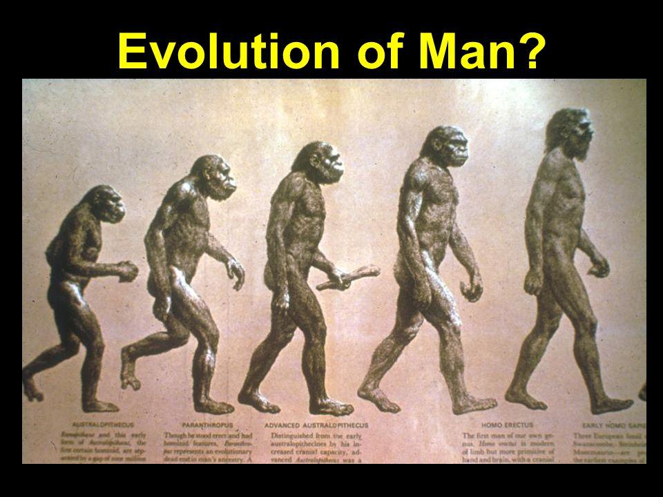 Evolution of man progression