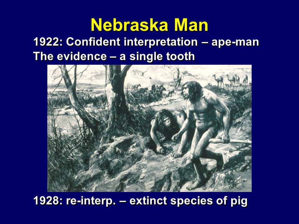 Nebraska Man Nebraska Man 1922: Confident interpretation – ape-man