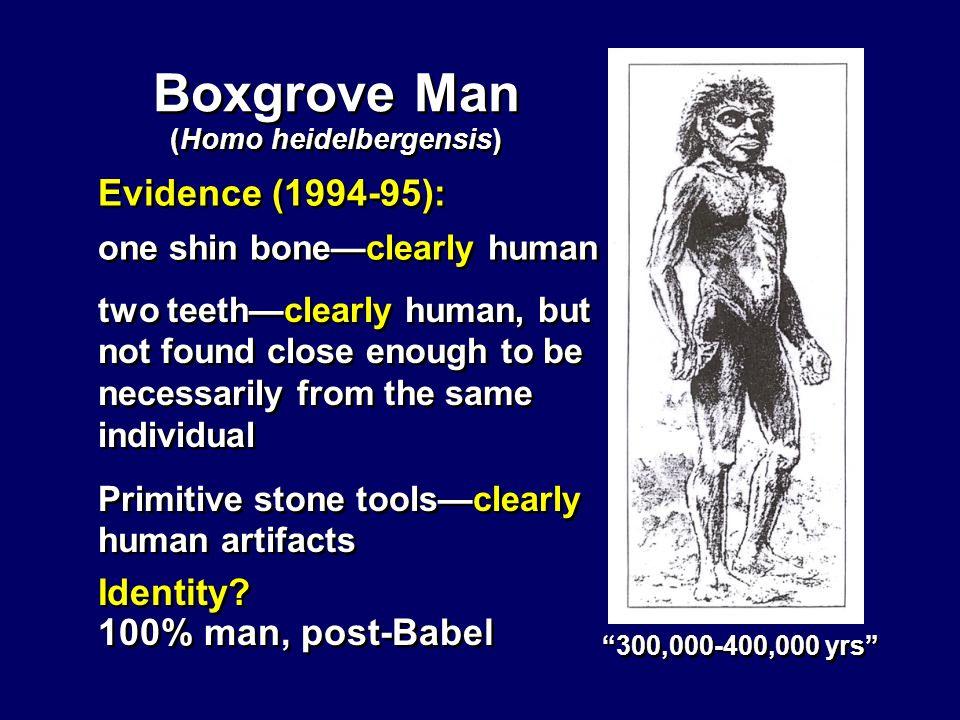 (Homo heidelbergensis)