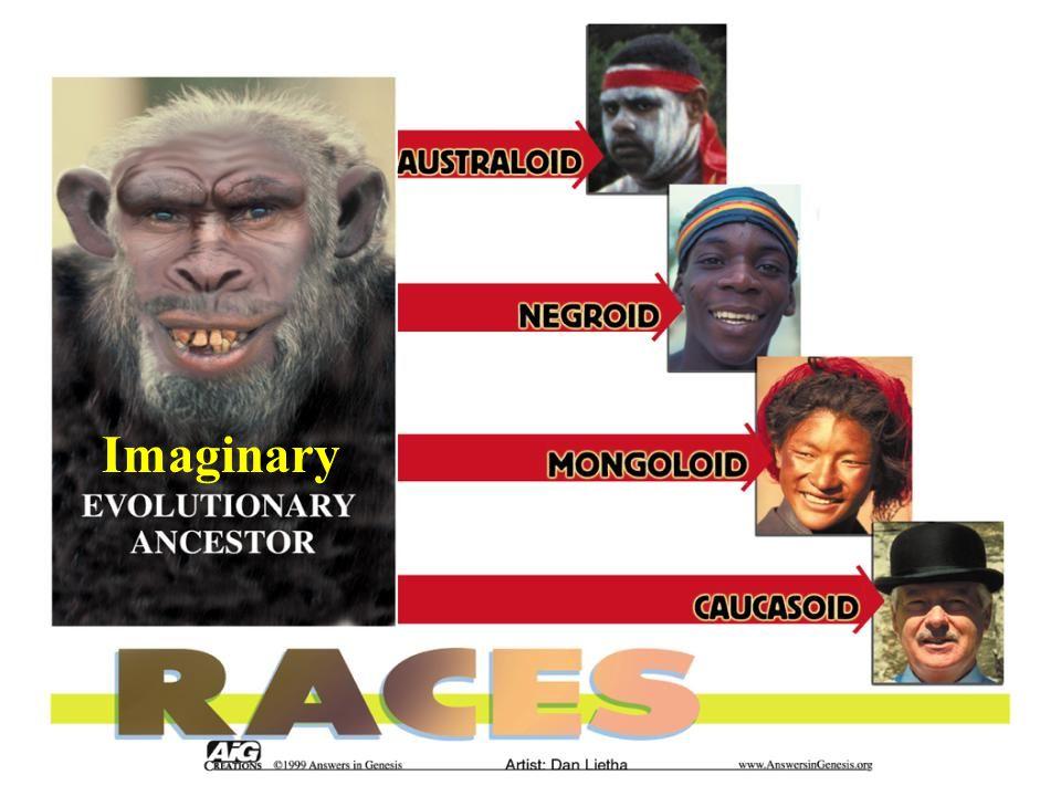 Races – Australoid to Caucasoid