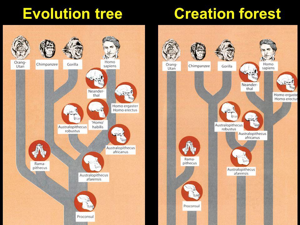 Evolution tree & creation forest