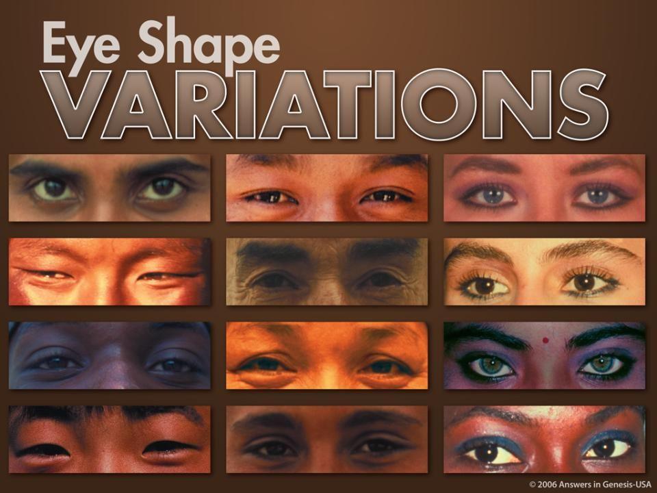 Eye Shape Variations 00635