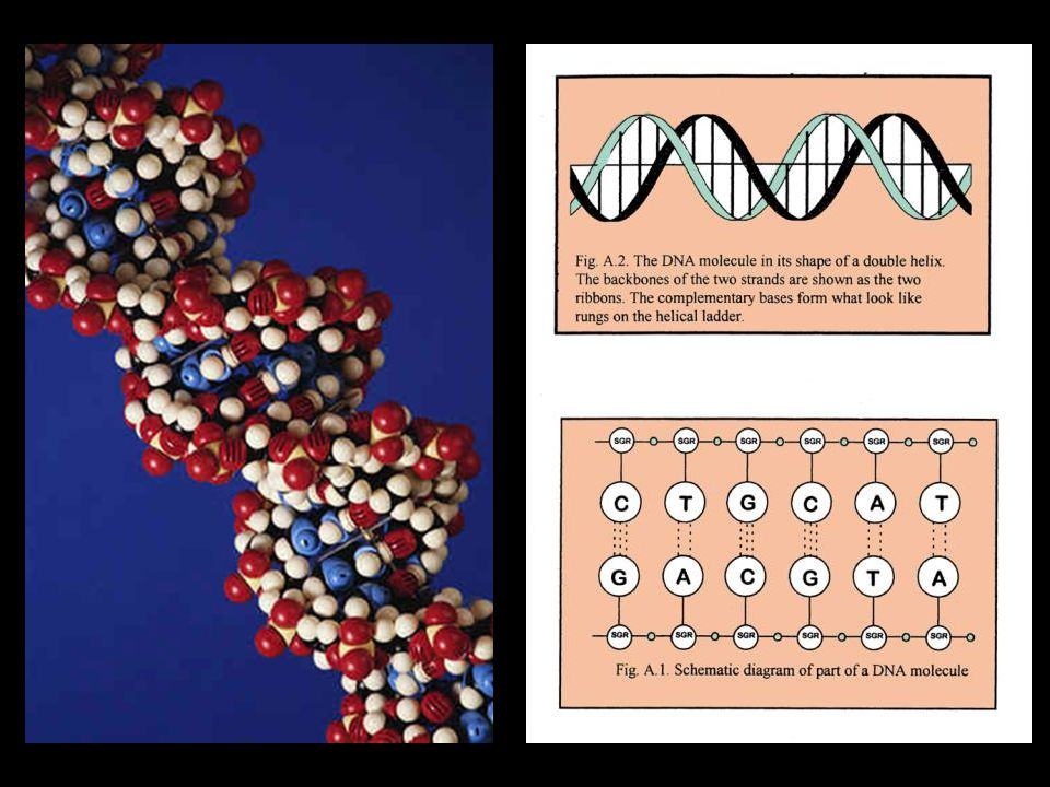 DNA picture and letters
