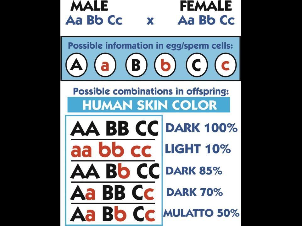 Variation—human skin color