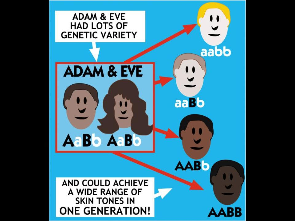 A&E genetic variation