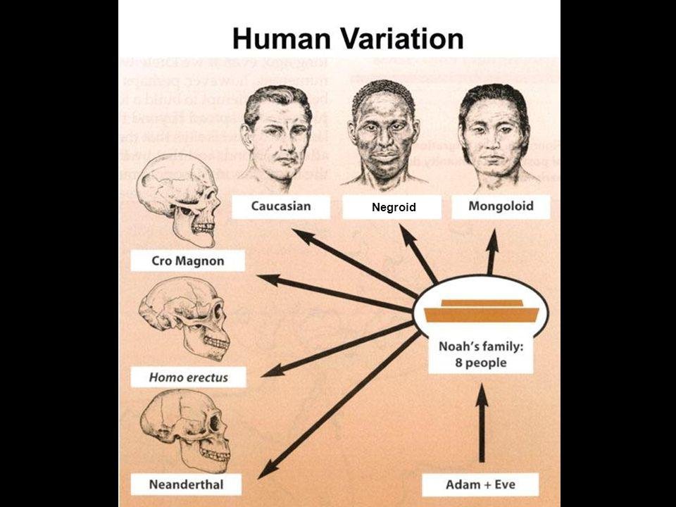 Human variation since Noah