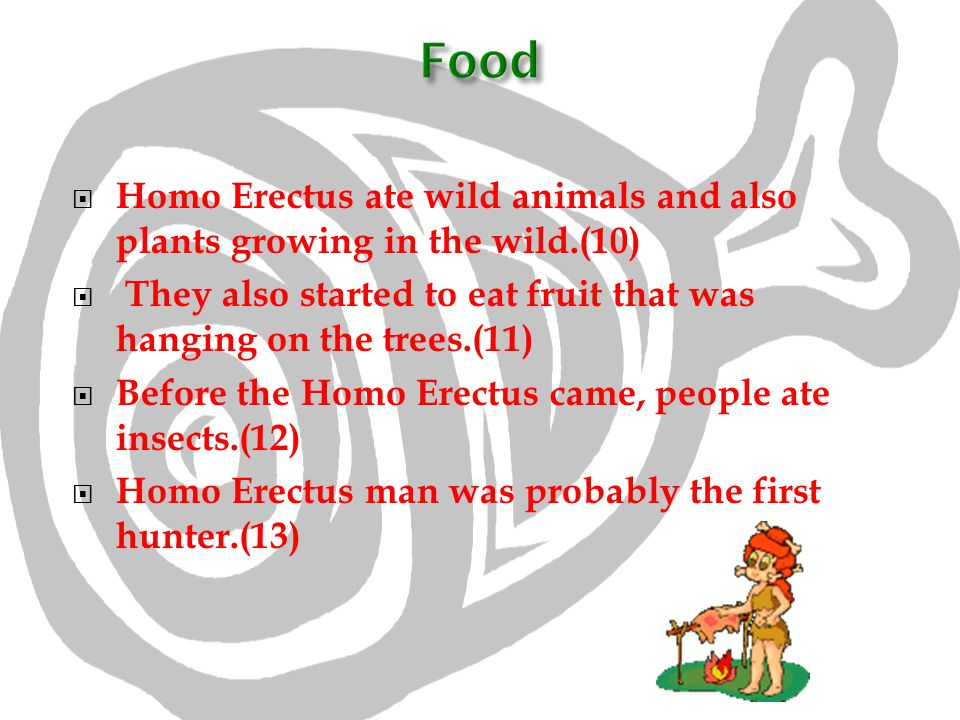 Food Homo Erectus ate wild animals and also plants growing in the wild.(10) They also started to eat fruit that was hanging on the trees.(11)