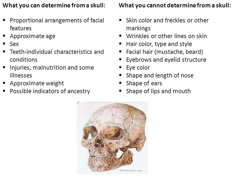 What you can determine from a skull: