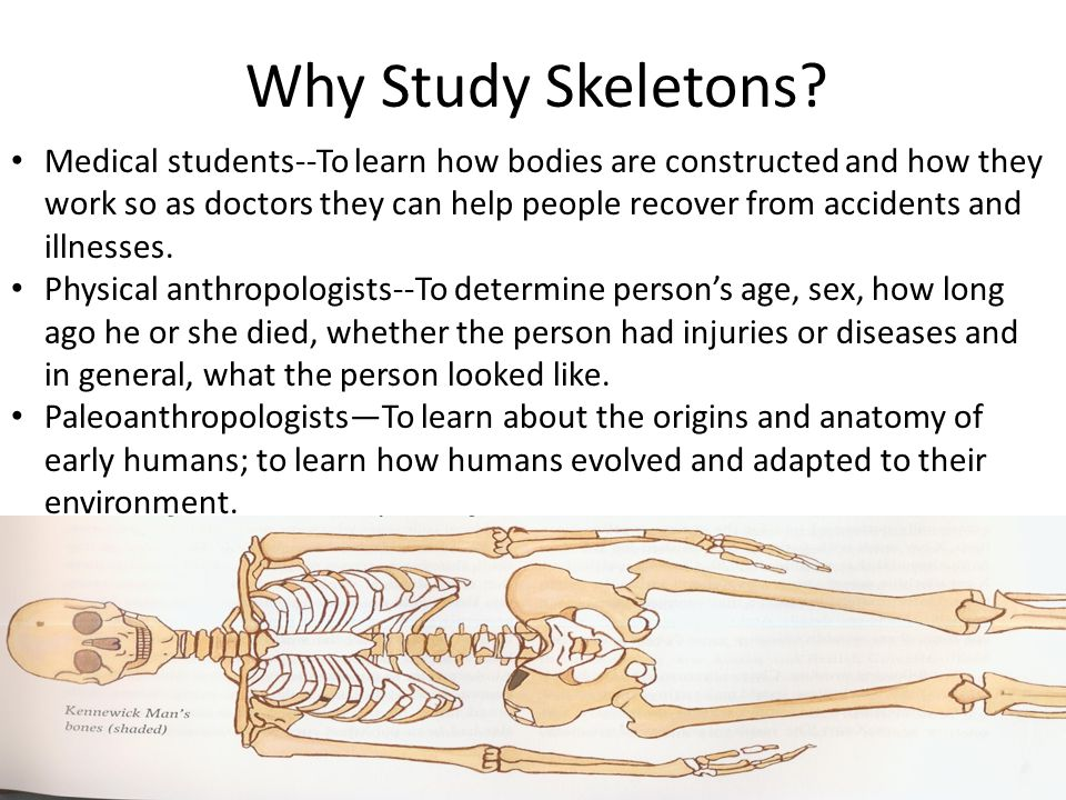 Why Study Skeletons