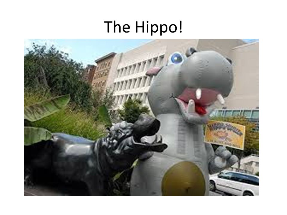 The Hippo!