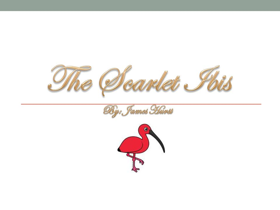 The Scarlet Ibis By: James Hurst