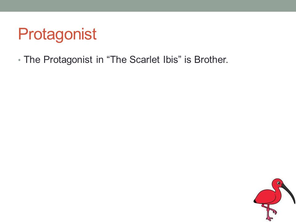 Protagonist The Protagonist in The Scarlet Ibis is Brother.
