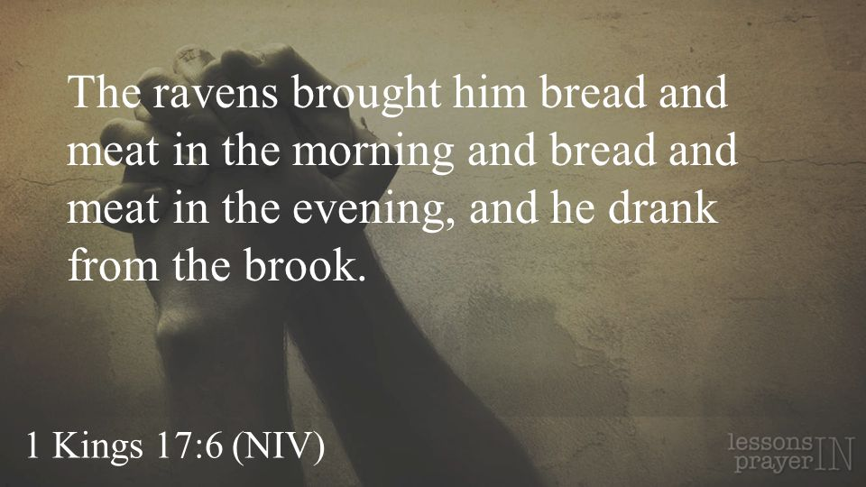 The ravens brought him bread and meat in the morning and bread and meat in the evening, and he drank from the brook.