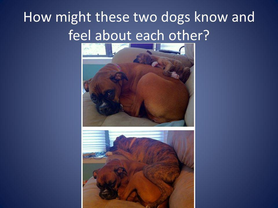 How might these two dogs know and feel about each other