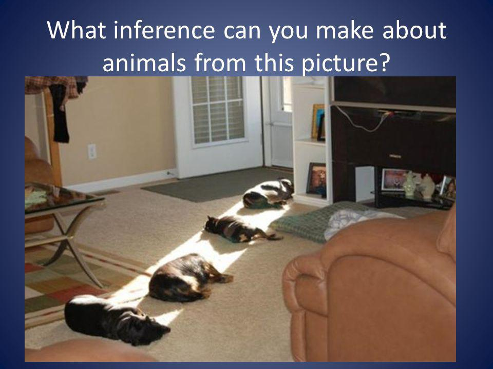 What inference can you make about animals from this picture