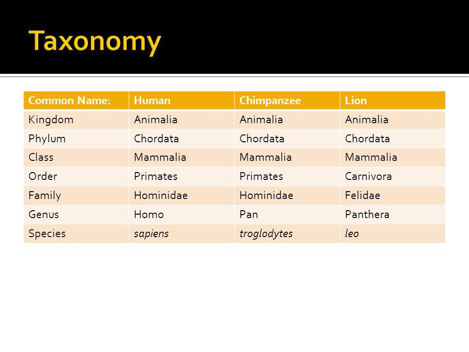 Taxonomy Common Name: Human Chimpanzee Lion Kingdom Animalia Phylum