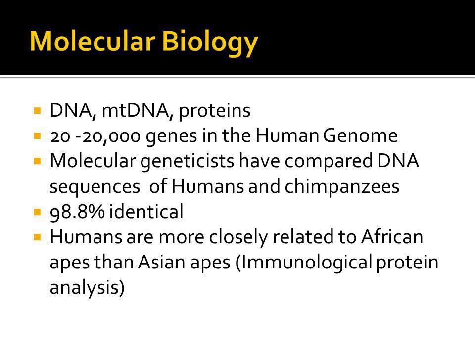 Molecular Biology DNA, mtDNA, proteins