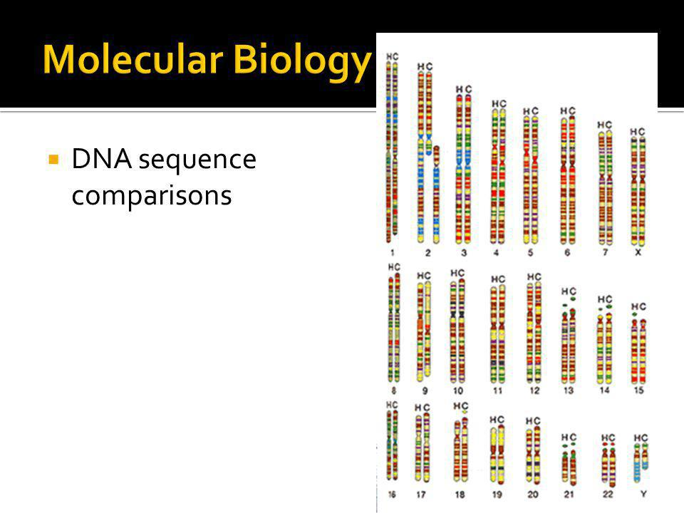 Molecular Biology DNA sequence comparisons