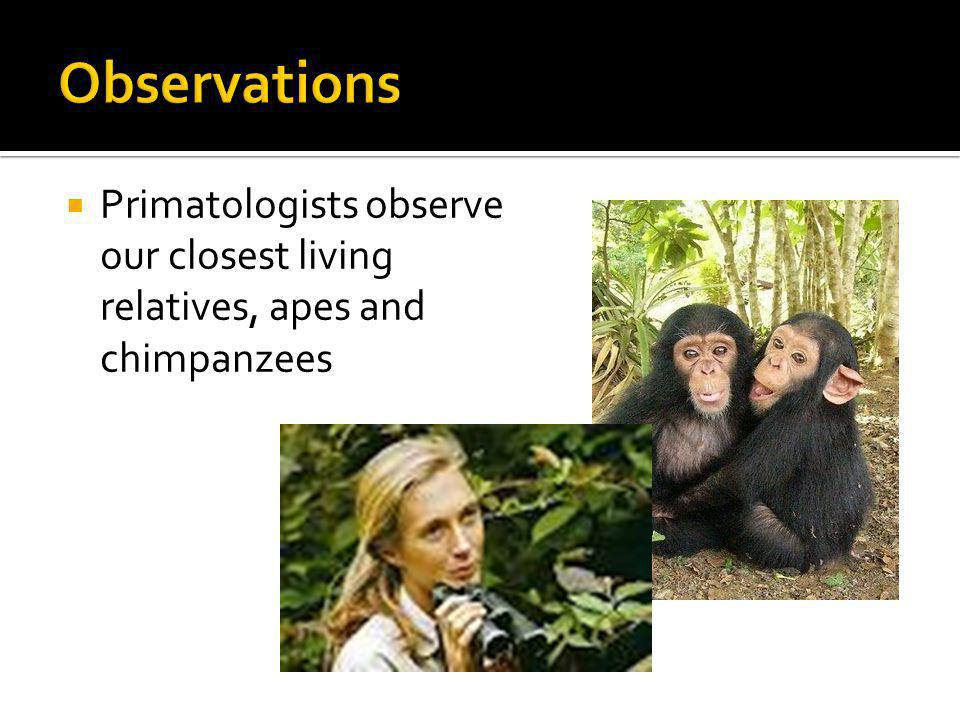 Observations Primatologists observe our closest living relatives, apes and chimpanzees
