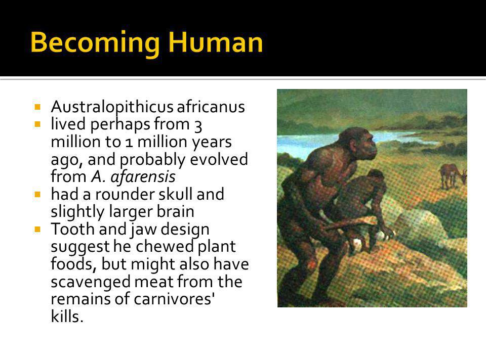 Becoming Human Australopithicus africanus