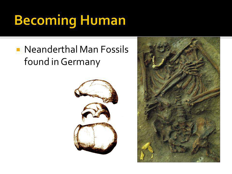 Becoming Human Neanderthal Man Fossils found in Germany