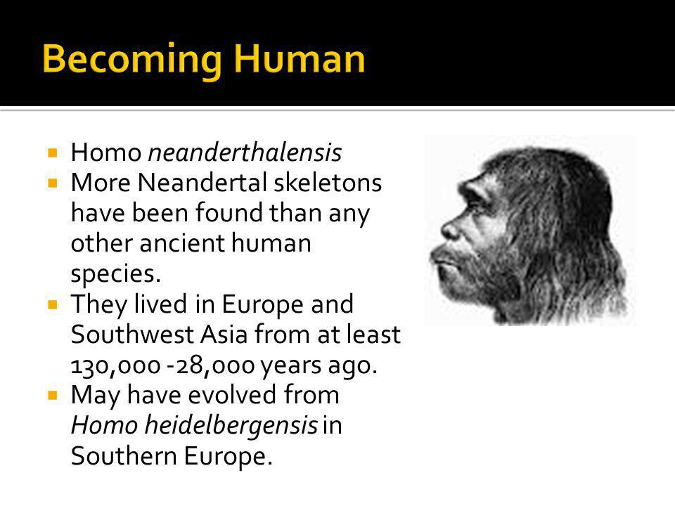 Becoming Human Homo neanderthalensis