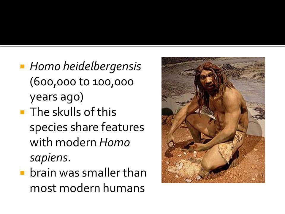 Homo heidelbergensis (600,000 to 100,000 years ago)