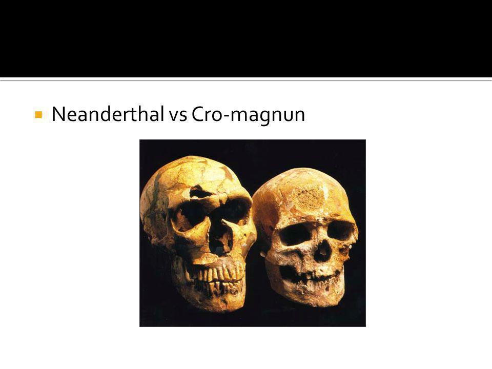 Neanderthal vs Cro-magnun