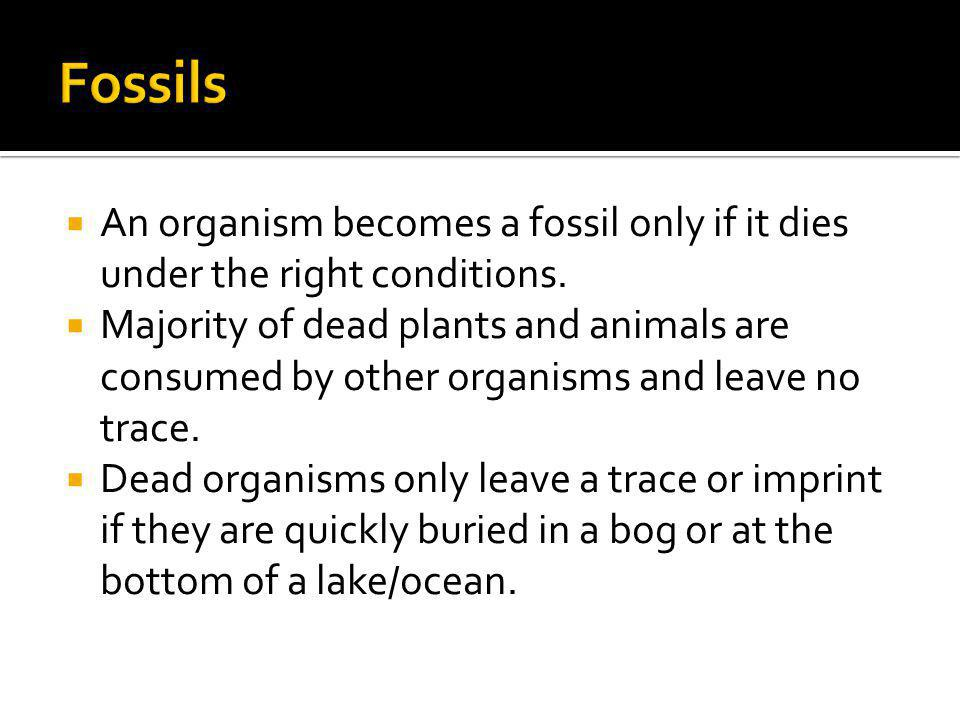 Fossils An organism becomes a fossil only if it dies under the right conditions.