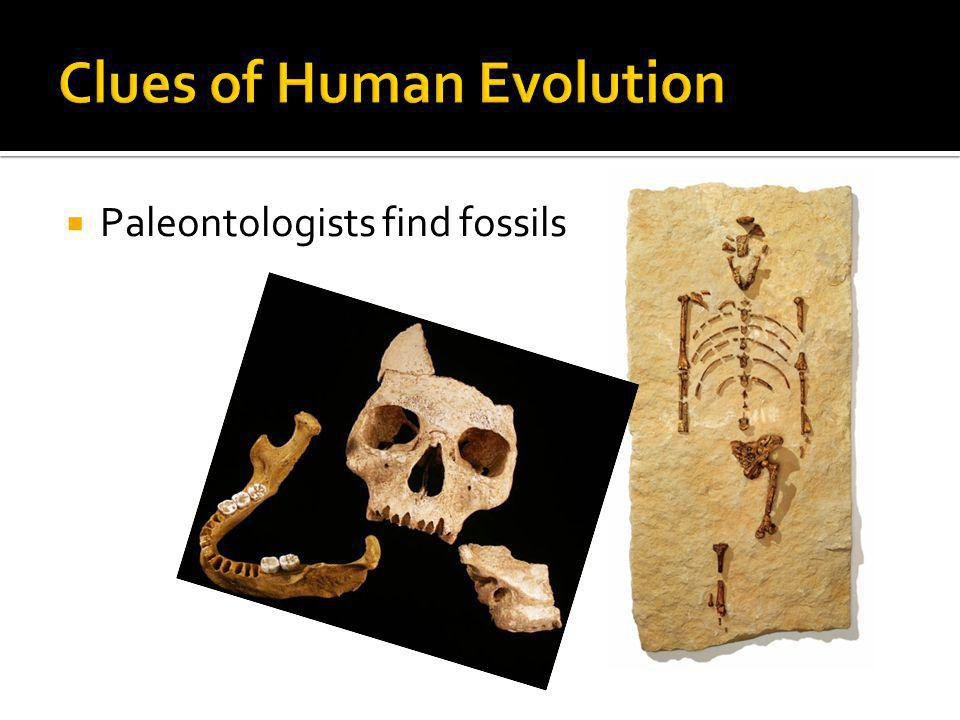 Clues of Human Evolution