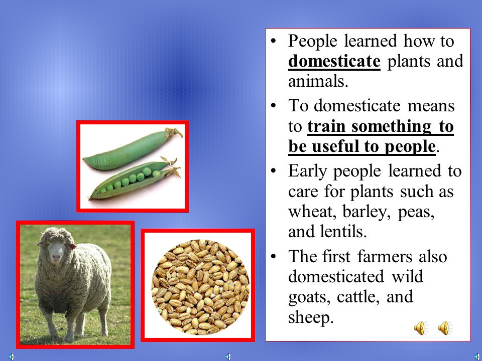 People learned how to domesticate plants and animals.